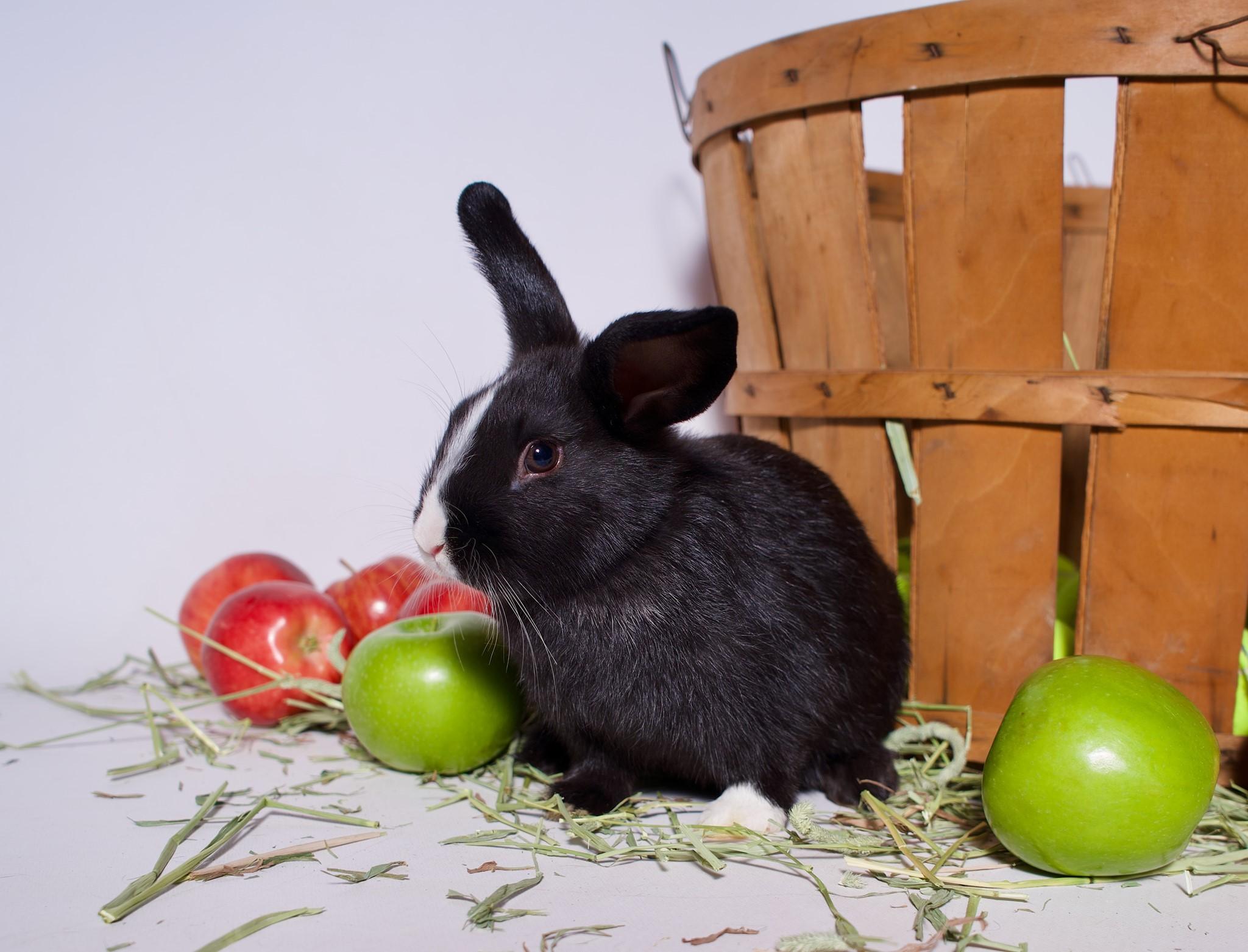 Adopt bunny in Riverside, CA